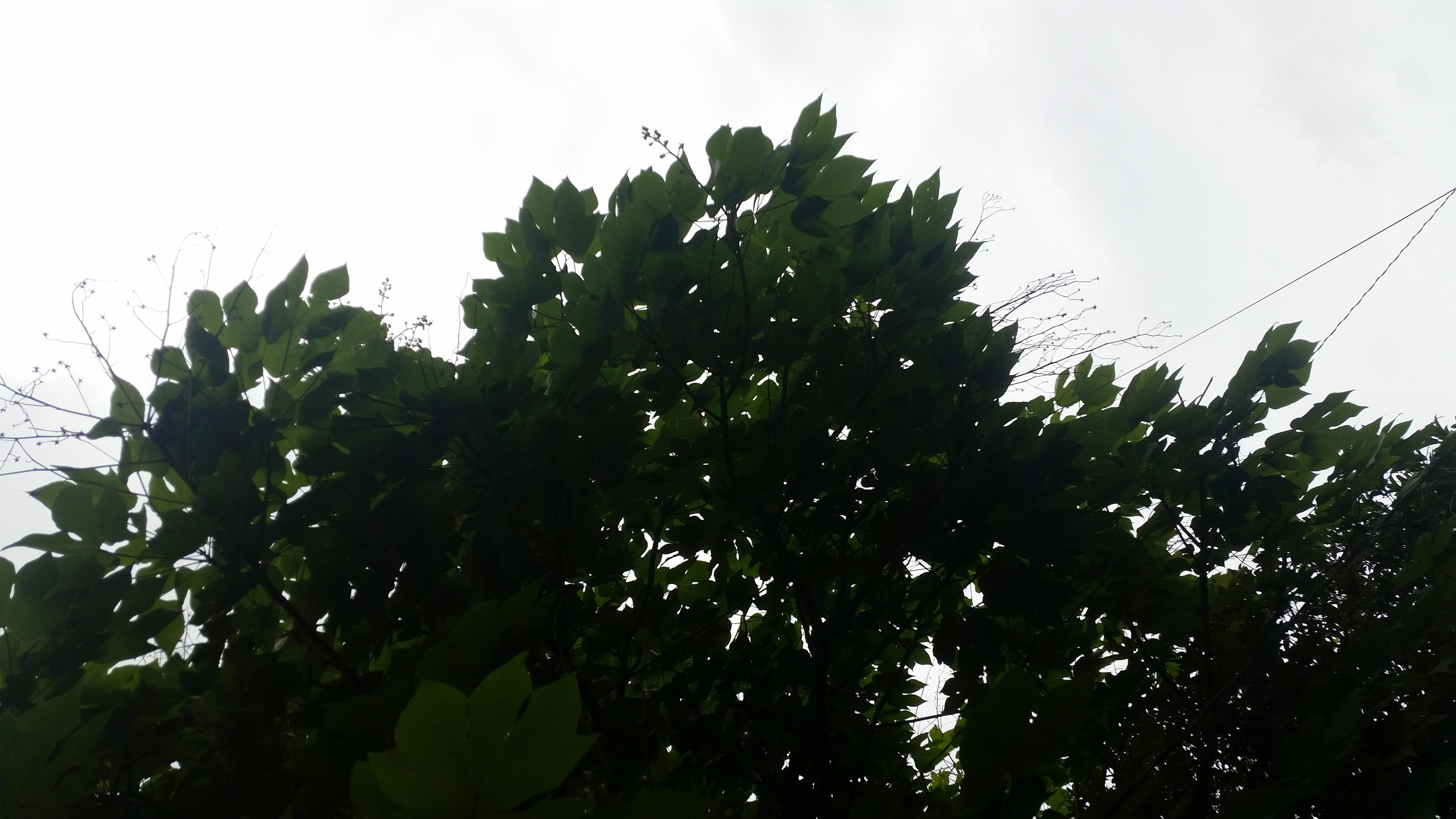 鳳凰のとまり木